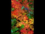 Fall Splendor by photoimagery, Photography->Nature gallery