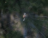 What a tangled web we weave. by GomekFlorida, photography->insects/spiders gallery