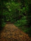 Walk by biffobear, photography->nature gallery