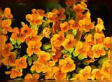 Golden Orange by trixxie17, photography->flowers gallery