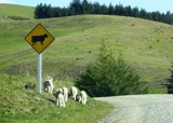 A Drive In The Country - Bad Lambs ! by LynEve, photography->landscape gallery