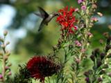Surprise! by wheedance, Photography->Birds gallery