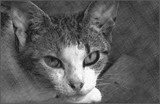 Portrait In Kitty by bfrank, contests->b/w challenge gallery