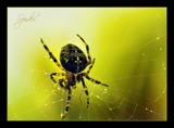 Spider by JQ, photography->insects/spiders gallery