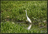 Whitey by Jimbobedsel, photography->birds gallery