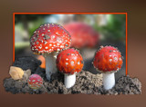 Fly agaric by wimida, photography->manipulation gallery