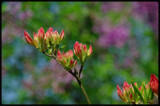 "another ""color palette"" from my garden by kanapon, Photography->Flowers gallery"