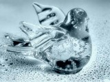 The Glass Bird by mesmerized, photography->manipulation gallery