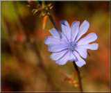Wildflower by tigger3, photography->flowers gallery