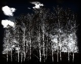 Into the Woods by Starglow, contests->b/w challenge gallery