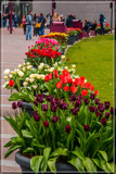 Amsterdam Tulip Festival 05 by corngrowth, photography->flowers gallery