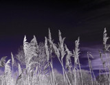 Tall Grasses by biffobear, photography->nature gallery