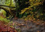 Autumnal Walk 3 by biffobear, photography->nature gallery