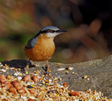 Spoilt for Choice by biffobear, photography->birds gallery