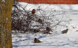 Rude Awakening by 0930_23, photography->birds gallery