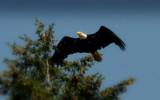 Finally by J_E_F, Photography->Birds gallery