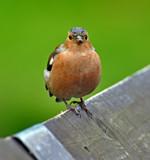 I got my beady eye on you by biffobear, photography->birds gallery