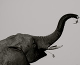 Aim High by The1, photography->animals gallery