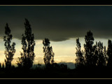 Poplars by LynEve, Photography->Landscape gallery