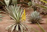 Majorelle's garden 2 by RAPH, photography->gardens gallery