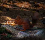 Little Red by biffobear, photography->animals gallery