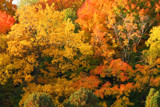 The Fullness of Autumn by Silvanus, photography->landscape gallery