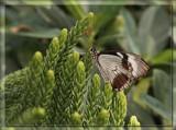 Butterfly Thirteen by Jimbobedsel, Photography->Butterflies gallery