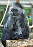 Bad Hair Day by biffobear, Photography->Animals gallery