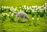 Ultimate Spring Feeling by corngrowth, photography->animals gallery
