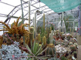 A Prickly Situation by braces, Photography->Gardens gallery