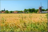 Almost Harvest Time by corngrowth, photography->landscape gallery