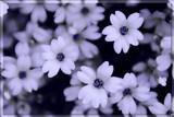 glas bloem............ by fogz, Photography->Manipulation gallery