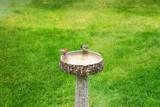 Water Cooler Gossip by kidder, Photography->Birds gallery