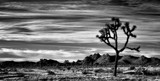 Joshua Tree by snapshooter87, photography->landscape gallery
