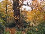 English Autumn by bbodien, photography->landscape gallery