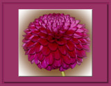 The Beauty Of The Dahlia _ Thirteenth Posting by tigger3, Photography->Flowers gallery