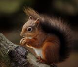 I'm back by biffobear, photography->animals gallery