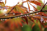 Fall Leaves, falling drops by Salishutter, photography->nature gallery
