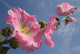 Looking up by Paul_Gerritsen, Photography->Flowers gallery