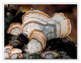 Seashells by gerryp, Photography->Mushrooms gallery