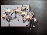 soft orchidaceous plant by kodo34, Photography->Manipulation gallery