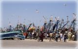 Essaouira fishing port by fogz, Photography->People gallery