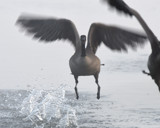 Coming To a Living Room Near You by garrettparkinson, photography->birds gallery
