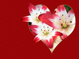 Stargazer Lily Heart by wheedance, Holidays gallery