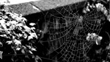 Wet Web by braces, contests->b/w challenge gallery