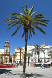 Palms in Cadiz by krt, photography->city gallery