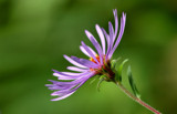 Wildflower by gerryp, Photography->Flowers gallery