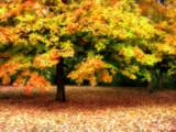 Green and Orange Autumn Colors by jojomercury, Photography->Landscape gallery