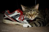 Shoe Love by avedeloff, photography->pets gallery