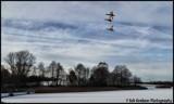 Flight by Dunstickin, photography->birds gallery